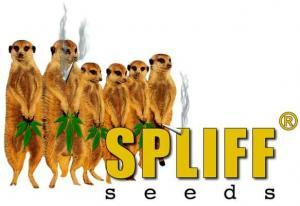 spliff seeds logo
