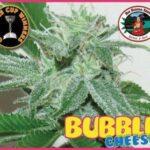 bb bubble cheese fem