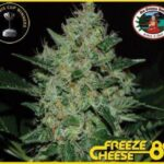 bb freeze cheese 89