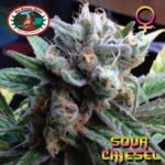 bb sour chiesel