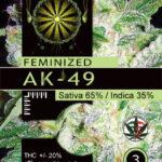 AK49-FEM-vision-seeds