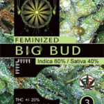 BIG-BUD-FEM-vision-seeds