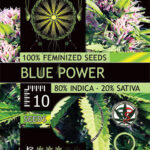 BLUE-POWER-FEM-vision-seeds