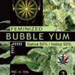 BUBBLE-YUM-FEM-Vision-Seeds