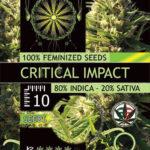 CRITICAL-IMPACT-FEM-Vision-Seeds