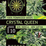 CRYSTAL-QUEEN-FEM-vision-seeds