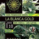 LA-BLANCA-GOLD-FEM-vision-seeds