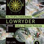 LOWRYDER-AUTOFEM-vision-seeds