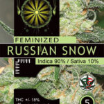 RUSSIAN-SNOW-FEM-vision-seeds