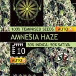 AMNESIA-HAZE-AUTOFEM-vision-seeds