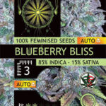 BLUEBERRY-BLISS-AUTOFEM-vision-seeds