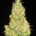 Delicious Seeds-fruitty cronic juice