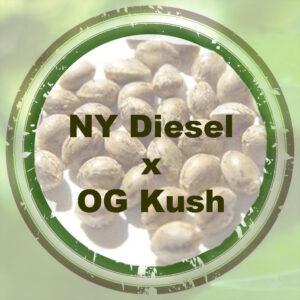 Bulk-Seeds-NY-Diesel-x-OG-Kush