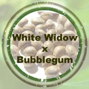Bulk-Seeds-White Widow-x-Bubblegum