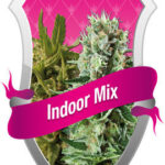 Royal Queen Indoor Mix - Royal Queen Seeds