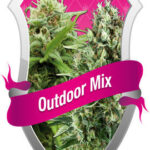 Royal Queen Outdoor Mix - Royal Queen Seeds