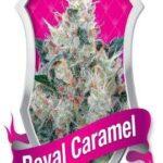 Honey Cream before Royal Caramel