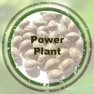 Bulk-Seeds-Power-Plant
