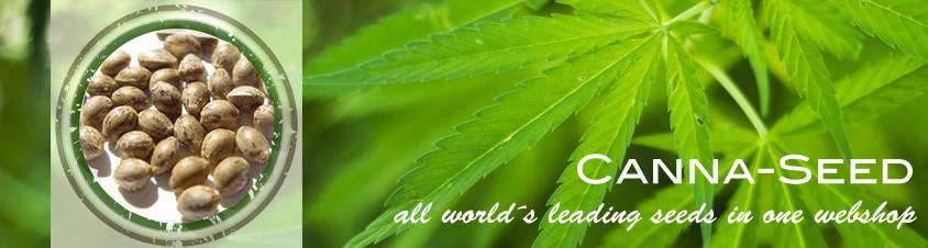 Bulk-Seeds-Canna-Seed