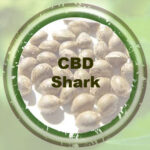 Bulk-Seeds-CBD-Shark