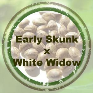 Early Skunk x White Widow
