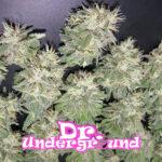 dr-underground-painkiller