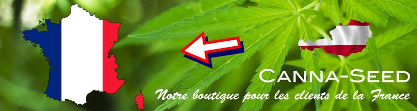 Graines-de-cannabis-France