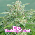 dr-underground-brooklyn-mango