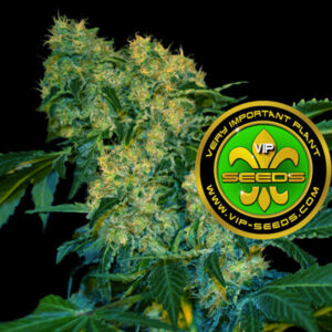 VIP_Seeds-chingis_khan