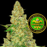 VIP_Seeds-power_vip