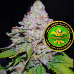 VIP_Seeds-white_berry