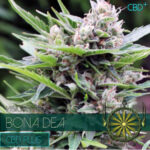 Bona Dea CBD Plus