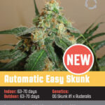 Automatic Easy Skunk