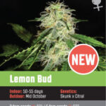 Lemon Bud fem