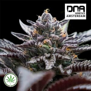 DNA-Genetics-Double-Stuffed