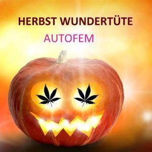 Herbst-Wundertüte-autofem