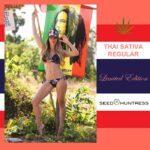 Seedhuntress-Thai-Sativa