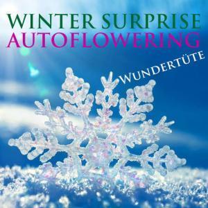 Winter Surprise autofem