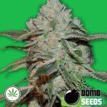 Bomb-Seeds-Atomic-fem