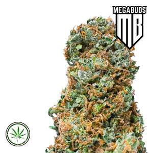 Mega-Buds-Big-Bruce-Fem