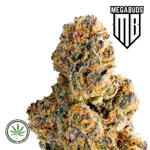 Mega-Buds-Colossal-Purps-fem