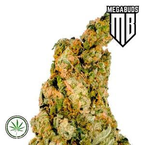 Mega-Buds-Giant-Zkittlez-Fem