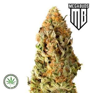 Mega-Buds-Mega-CBD-Fem