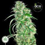 ACE-Seeds-Ethiopia-Malawi-reg