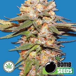 Bomb-Seeds-Big-Bomb-auto