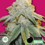 Bomb-Seeds-Bubble-Bomb-fem
