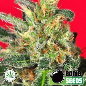 Bomb-Seeds-Cluster-Bomb-fem