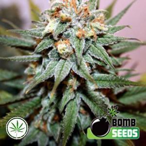 Bomb-Seeds-Hash-Bomb-reg