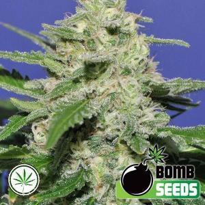 Bomb-Seeds-Widow-Bomb-reg