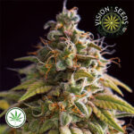 Vision-Seeds-Caramel-Monster-Fem